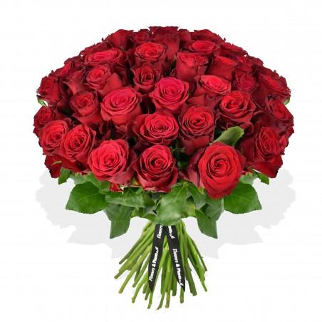 Rhodos Rose £19.99