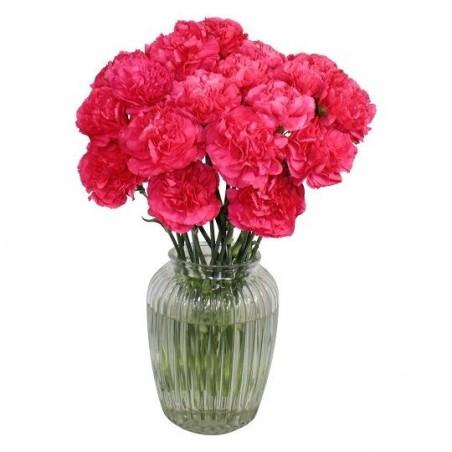Carnival Carnations £28.99
