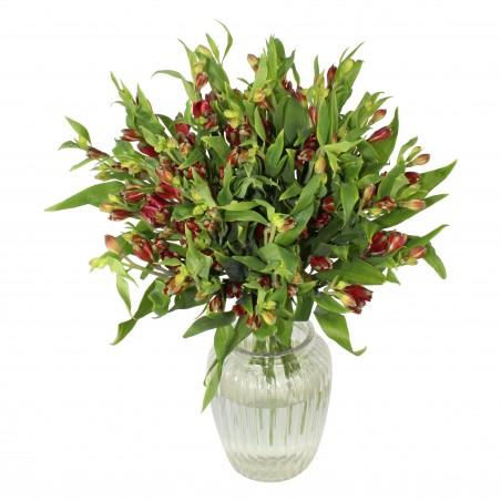 Alstroemeria Bliss £27.99