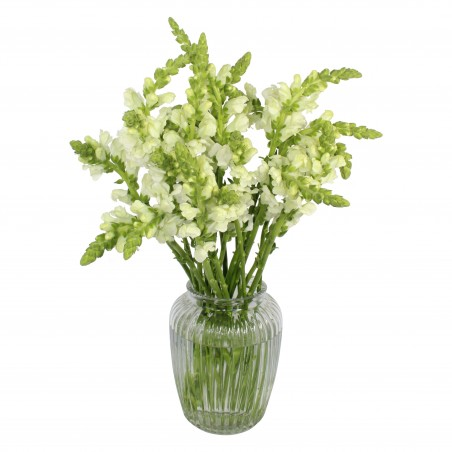 Snapdragon Sensation £28.99
