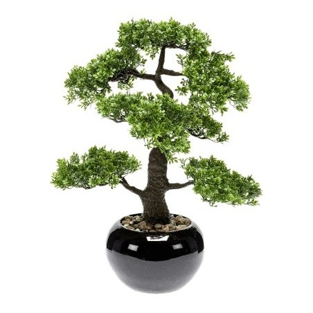 Bonsai Ficus Mini £149.99