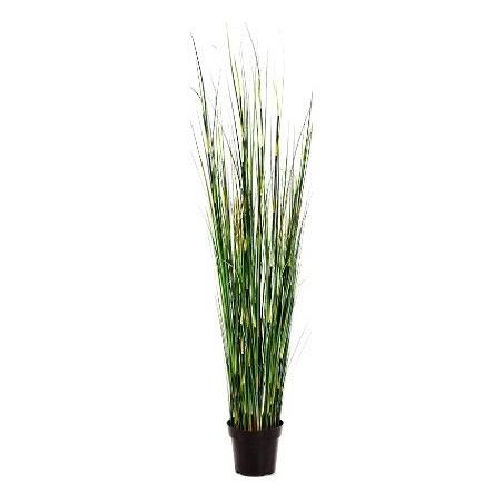 Bamboo wild grass £89.99