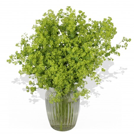 Green Machine £26.99