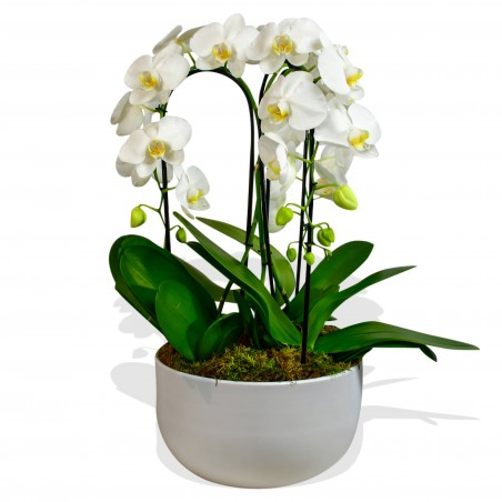 Cascading Orchids £159.99