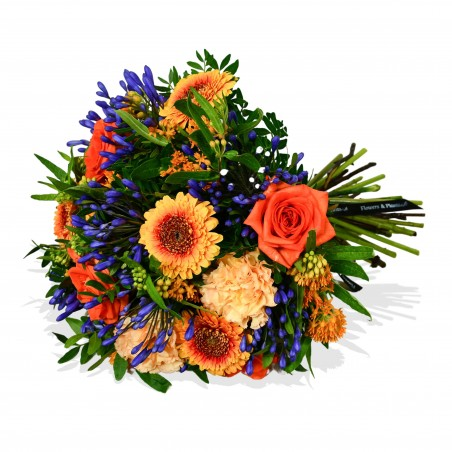 Agapanthus and Rose £34.99