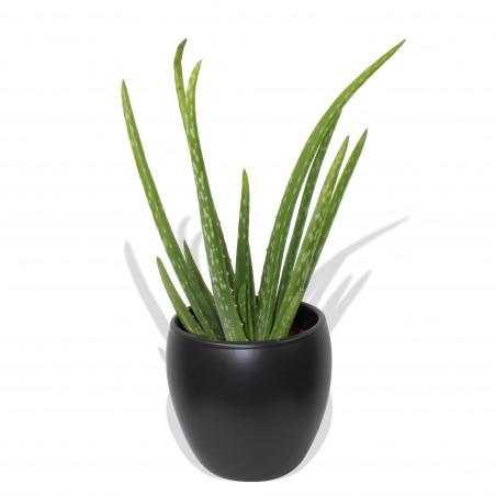 Classic Aloe Vera £20.99