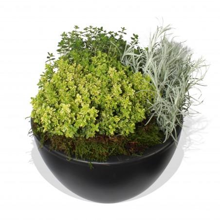 Herbal Design £27.99