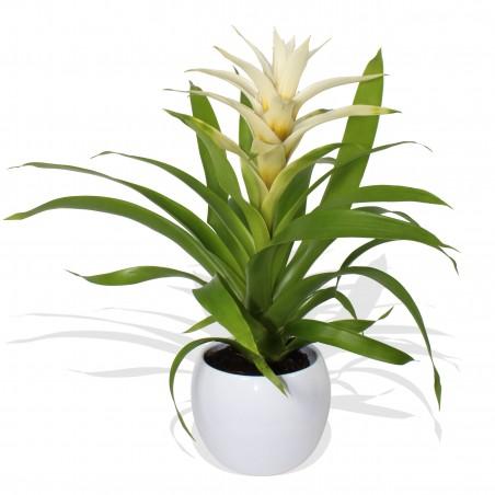 White Bromelia £19.99
