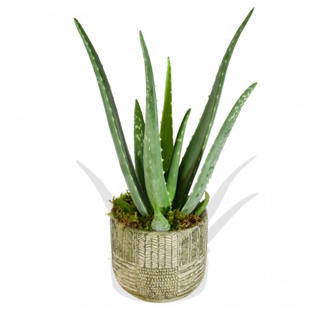Aloe Vera £18.99
