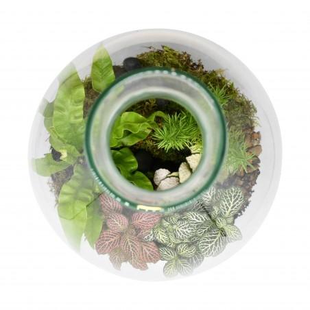 Terrarium in Hourglass vase £44.99