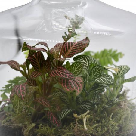Terrarium in Long-Neck Bottle £44.99