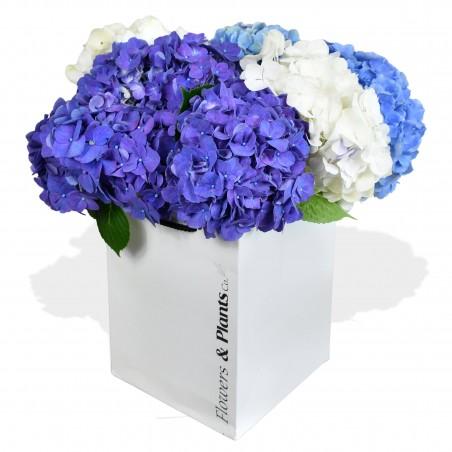 Happy Hydrangeas £39.99