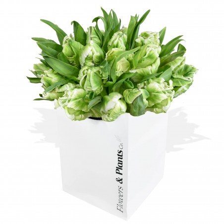 Parrot Tulips £27.99