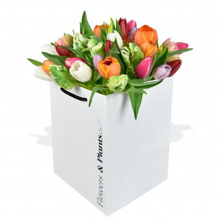 Tulip Temptation £24.99