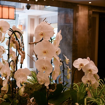 large orchids for business