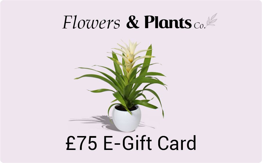 £75 plants gift card